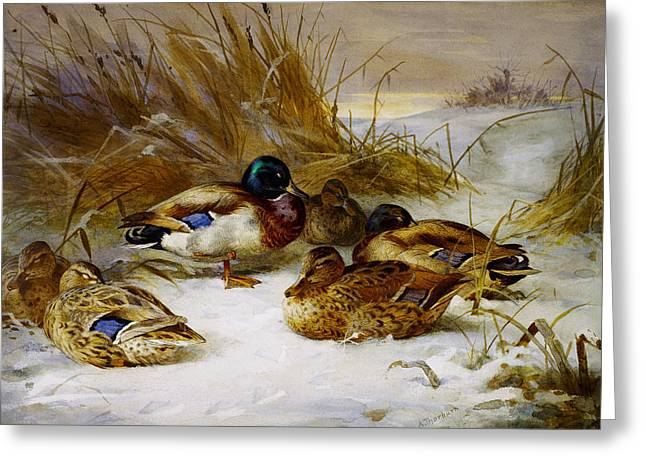 Winter Landscape With Animals Greeting Cards - Winter landscape with mallard Greeting Card by Celestial Images