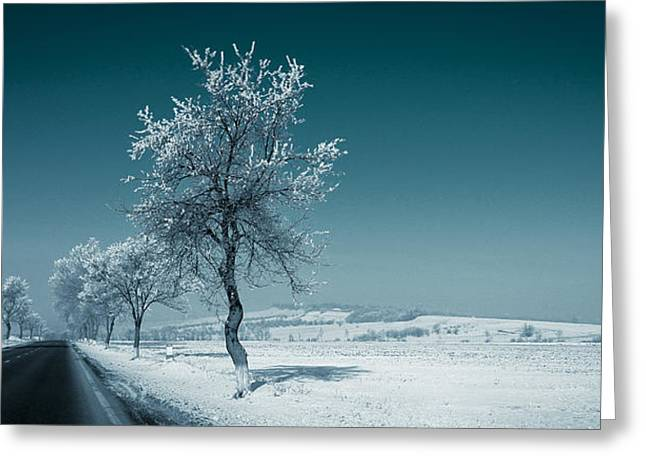 Panorama Greeting Cards - Winter landscape with snowy trees Greeting Card by Vlad Baciu