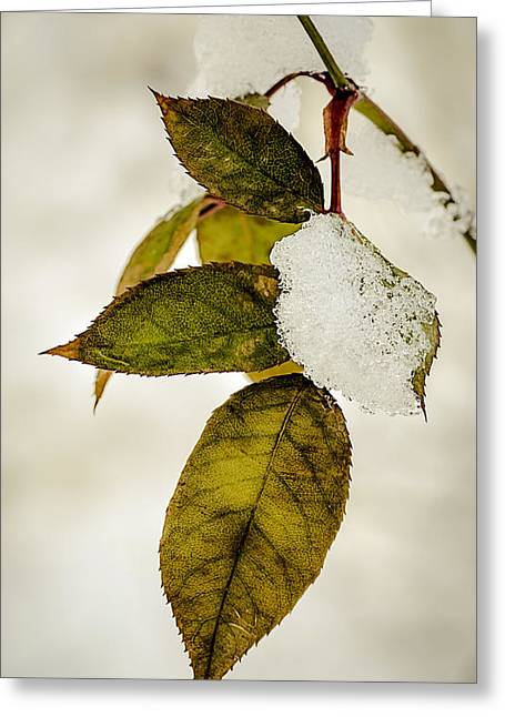Snow Scenes Greeting Cards - Winter Leaves and Snow Greeting Card by Julie Palencia