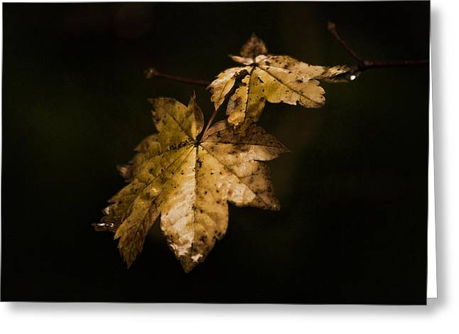 Ron Roberts Photography Greeting Cards - Winter Leaves Greeting Card by Ron Roberts
