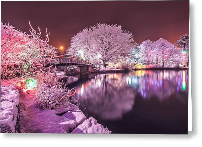 Winter Photos Photographs Greeting Cards - Winter Lights at Bowring Park Greeting Card by Gord Follett