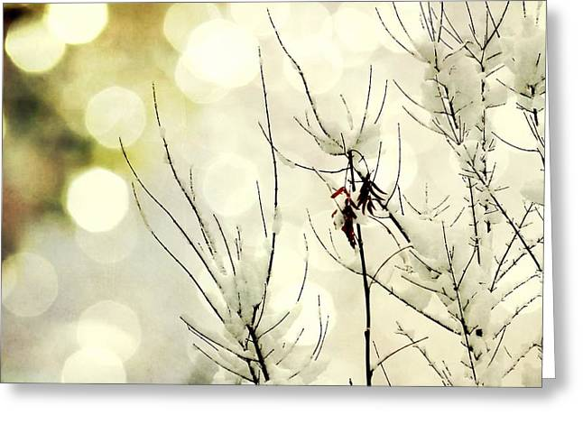 Winter Solstice Framed Prints Greeting Cards - Winter Lights Greeting Card by Leah Moore