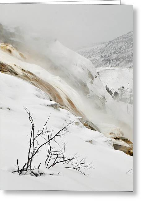 Mammoth Terrace Greeting Cards - Winter Limbs Greeting Card by Bruce Gourley