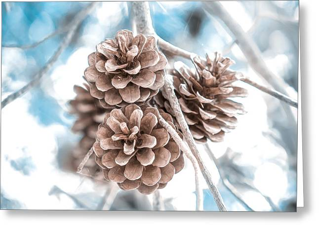 Pine Cones Mixed Media Greeting Cards - Winter Greeting Card by Loredana Isac