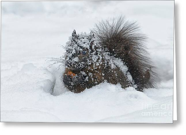 North American Wildlife Photographs Greeting Cards - Winter Luncheon Greeting Card by Sandra Bronstein