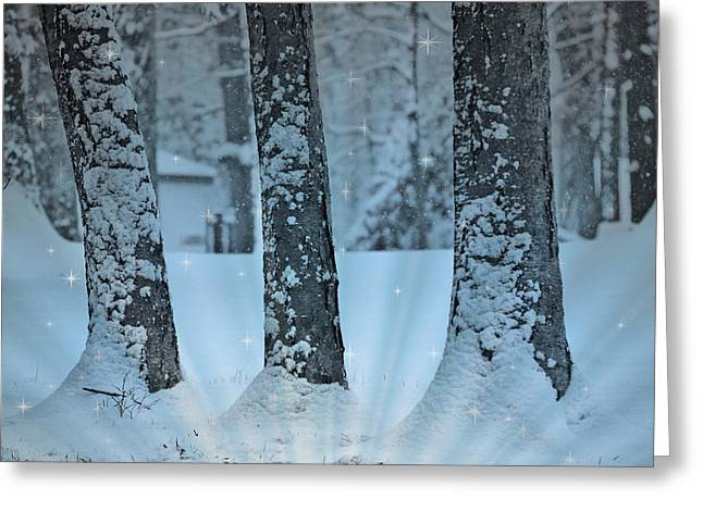 Winter Miracle Greeting Card by Trish Tritz