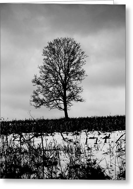 Cornfield Greeting Cards - Winter Mood In Ohio Greeting Card by Dan Sproul