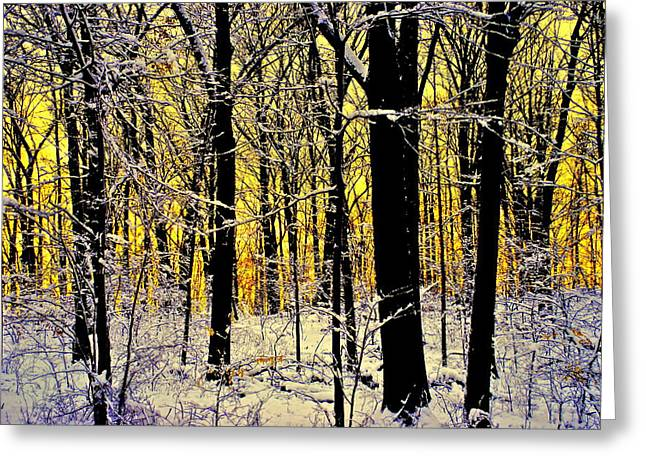 Chilling Greeting Cards - Winter Mood Lighting Greeting Card by Frozen in Time Fine Art Photography