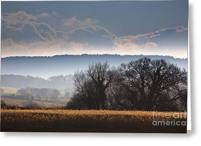 Winter Scenes Rural Scenes Photographs Greeting Cards - Winter Morning Greeting Card by Jan Bickerton