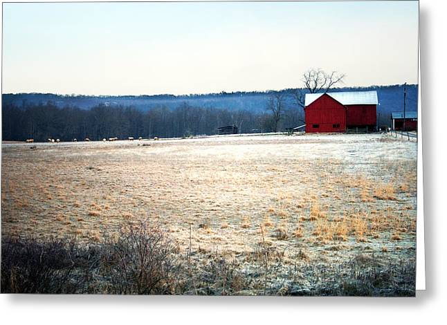 Meaghan Troup Greeting Cards - Winter Morning  Greeting Card by Meaghan Troup