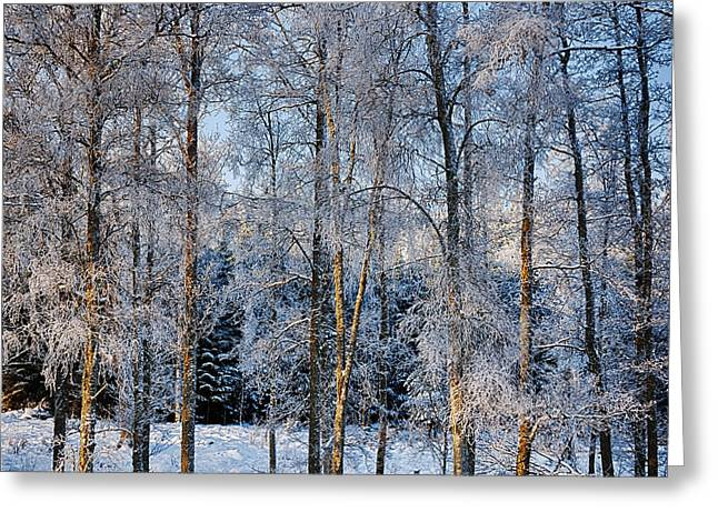 Snow Scape Greeting Cards - Winter Nature Ans Scenery Greeting Card by Christian Lagereek