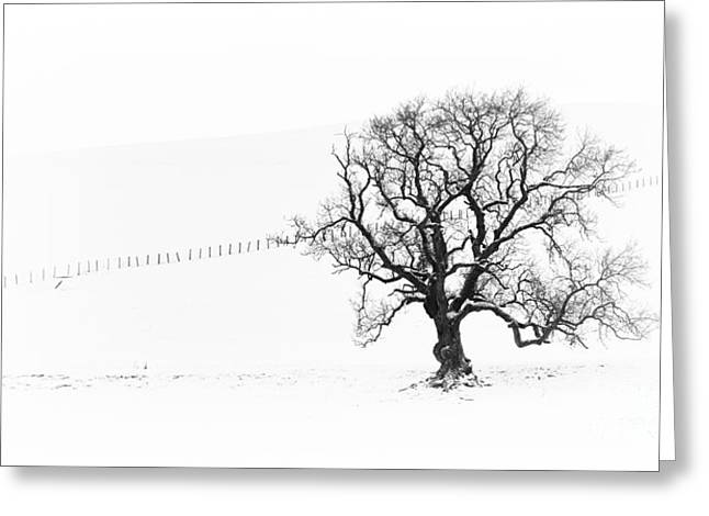 Fence Line Greeting Cards - Winter Oak Tree Greeting Card by Tim Gainey