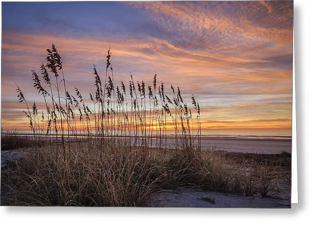 Steve Dupree Greeting Cards - Winter Oats Greeting Card by Steve DuPree
