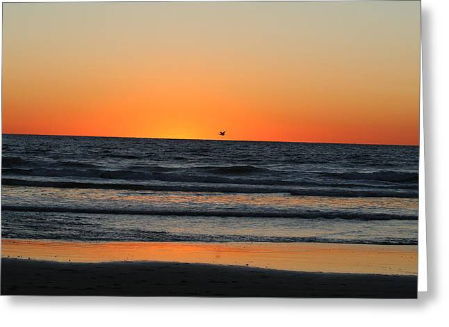 Pelicans Over Ocean Greeting Cards - Winter ocean sunset Greeting Card by Teddy V