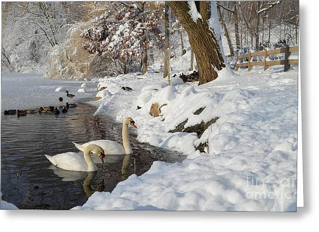 Swans... Greeting Cards - Winter on the Lake Greeting Card by Janet Davaros