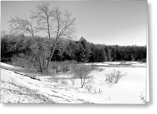 Evergreen Covered In Snow Greeting Cards - Winter on the Moose River Greeting Card by David Patterson