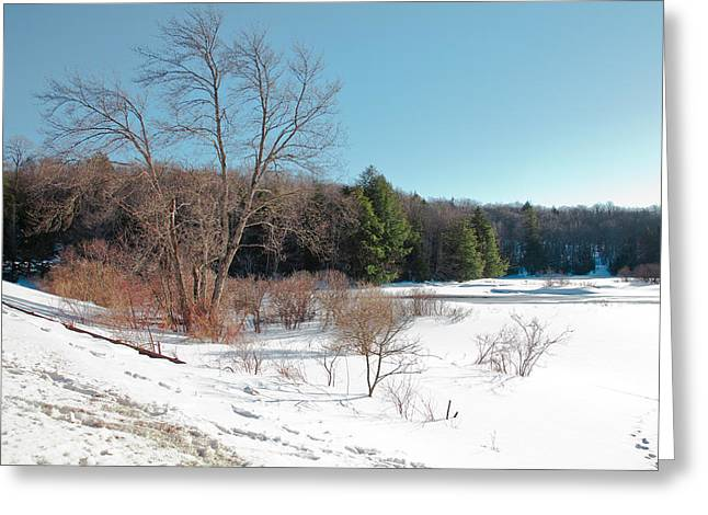 Evergreen Covered In Snow Greeting Cards - Winter on the Moose River - Old Forge New York Greeting Card by David Patterson