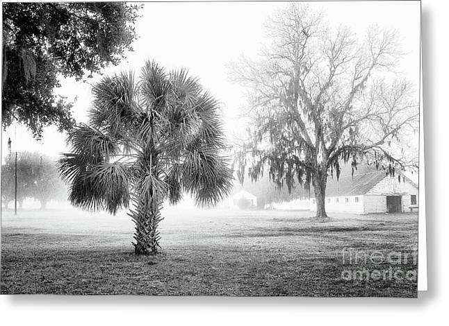 Palmetto Trees Greeting Cards - Winter Palmetto Greeting Card by Scott Hansen