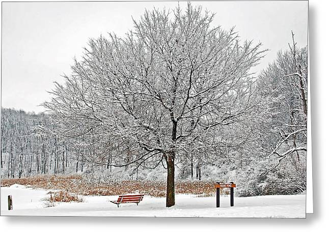 Mendon Greeting Cards - Winter Park Greeting Card by Aimee L Maher Photography and Art