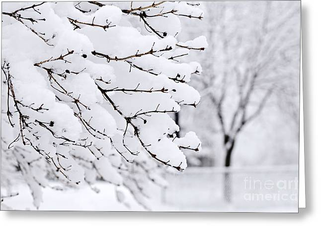 Snow-covered Landscape Photographs Greeting Cards - Winter park under heavy snow Greeting Card by Elena Elisseeva