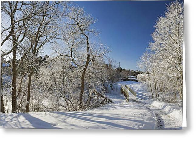 Winter path Greeting Card by Anna Grigorjeva