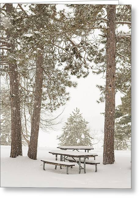 Pinus Resinosa Greeting Cards - Winter Picnic by the Lake Greeting Card by Tim Grams