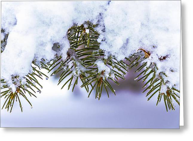 Pines Pyrography Greeting Cards - Winter Pine Greeting Card by Rick Bartrand