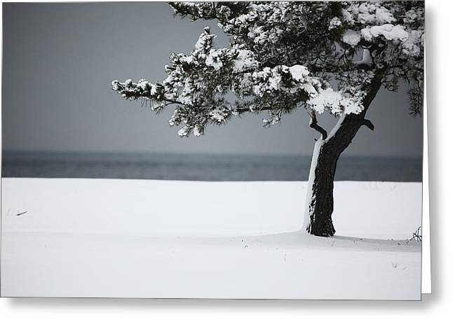 Snow-covered Landscape Photographs Greeting Cards - Winter Quiet Greeting Card by Karol  Livote