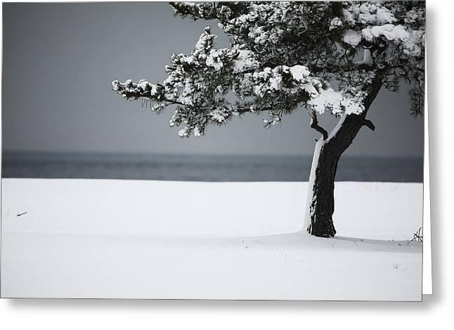 Winter Quiet Greeting Card by Karol  Livote