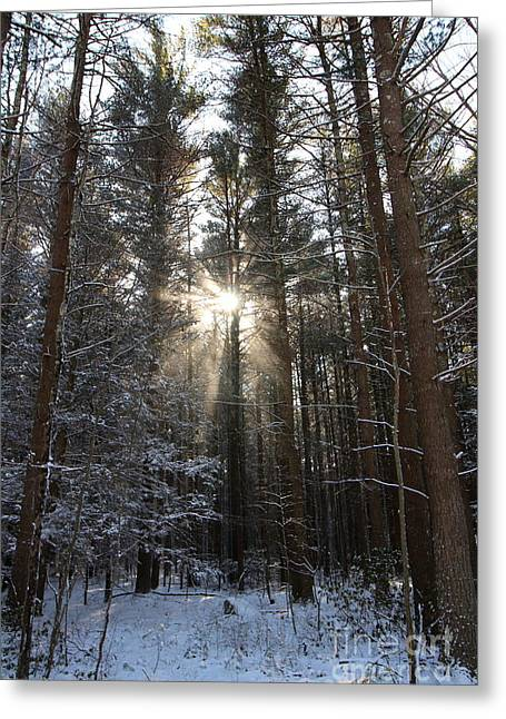 Snow-covered Landscape Greeting Cards - Winter Rays  Greeting Card by Neal  Eslinger