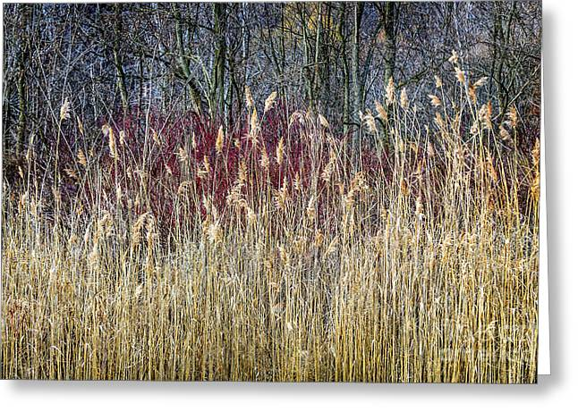 Forest Detail Greeting Cards - Winter reeds and forest Greeting Card by Elena Elisseeva