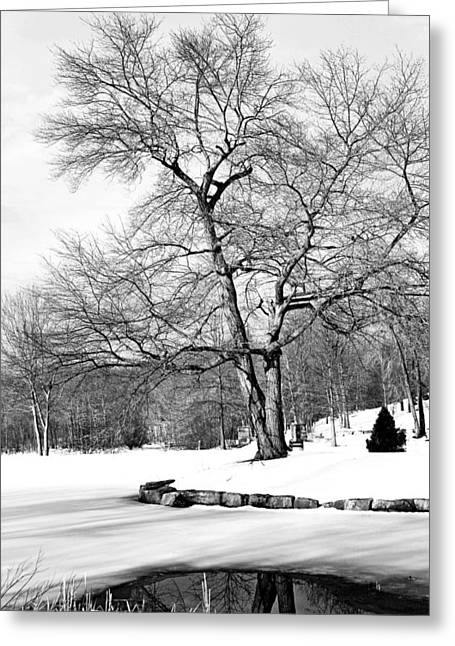 Winter Reflects In Black And White Greeting Card by Karol Livote