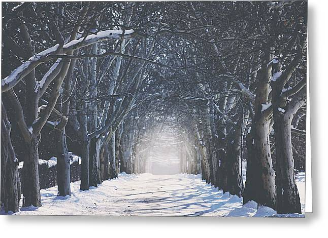 Winter Tree Greeting Cards - Winter Road Greeting Card by Carrie Ann Grippo-Pike