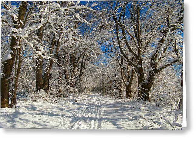 Winter Road Greeting Card by Raymond Salani III