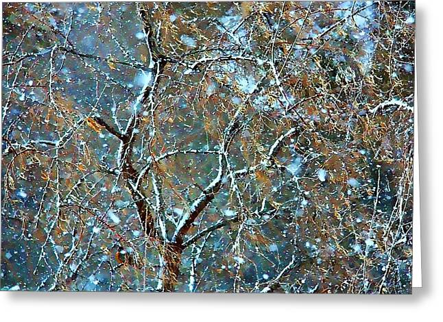 Solstice Greeting Cards Greeting Cards - Winter Robin Greeting Card by Kathy Bassett