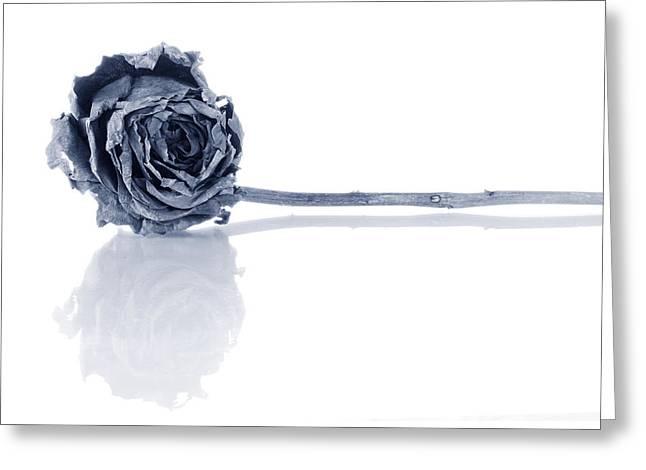 Depress Greeting Cards - Winter Rose Greeting Card by Jim Hughes