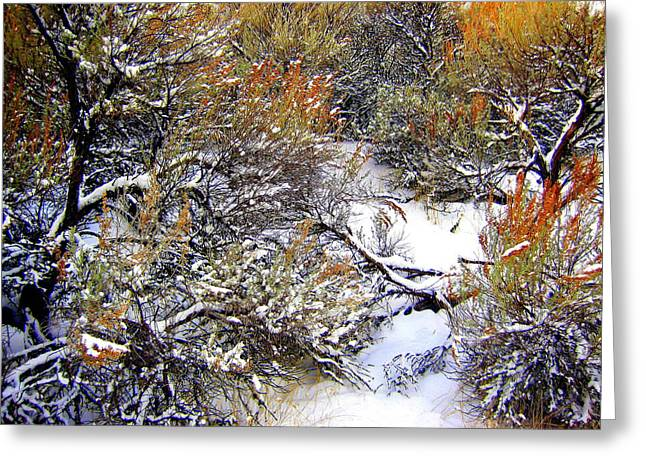 Winter Solstice Greeting Cards Greeting Cards - Winter Sage Greeting Card by Kathy Bassett