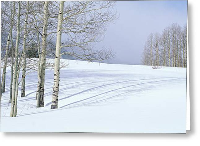 Panoramics Greeting Cards - Winter Scene, Colorado Greeting Card by Panoramic Images