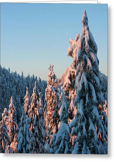 (c) 2010 Photographs Greeting Cards - Winter Scenery Greeting Card by Pierre Leclerc Photography