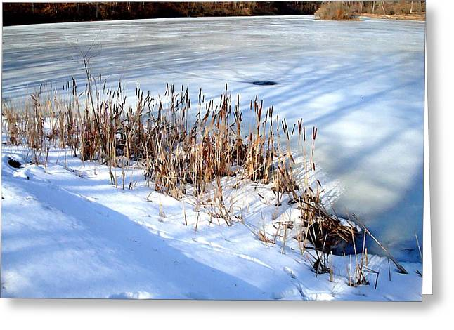 Indiana Winters Digital Art Greeting Cards - Winter Shadows Greeting Card by BackHome Images