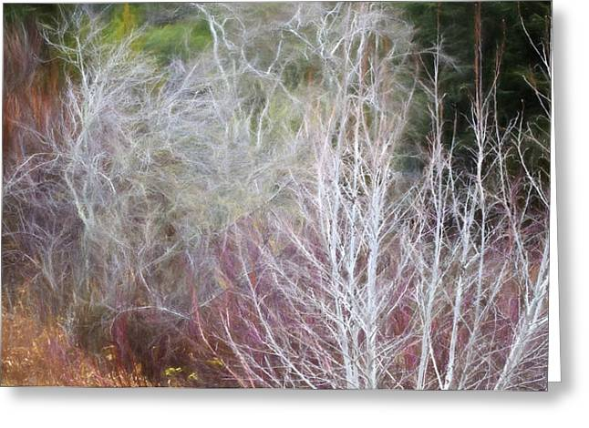 Saxon Holt Greeting Cards - Winter Shrub Border with Alder Greeting Card by Saxon Holt