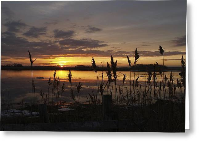 Snowy Evening Greeting Cards - Winter Sky Greeting Card by Patricia McKay