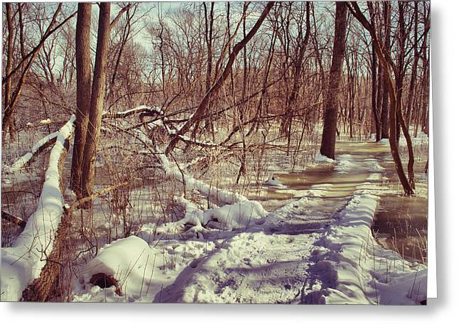 Environmental Center Greeting Cards - Winter Slough Greeting Card by Shutter Happens Photography