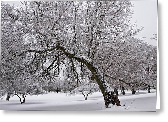 Snow Tree Prints Greeting Cards - Winter Snowfall at Garfield Park No. 0988 Greeting Card by Randall Nyhof