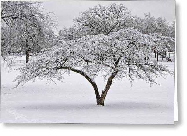 Snow Tree Prints Greeting Cards - Winter Snowfall at Garfield Park No. 0996 Greeting Card by Randall Nyhof
