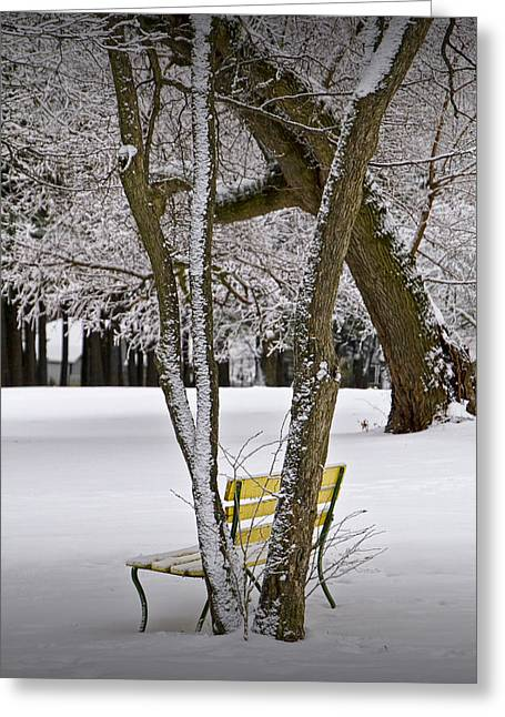 Snow Tree Prints Greeting Cards - Winter Snowfall at Garfield Park with Yellow Park Bench No. 0963 Greeting Card by Randall Nyhof