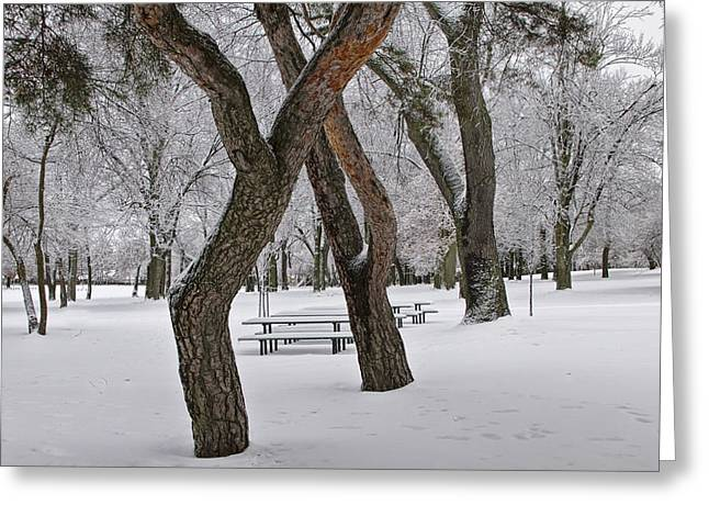 Snow Tree Prints Greeting Cards - Winter Snowfall at the City Park No. 0920 Greeting Card by Randall Nyhof