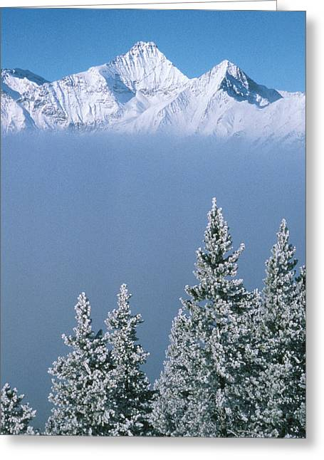 Emerging Greeting Cards - Winter Snowscape Mountain And Evergreens Greeting Card by Anonymous