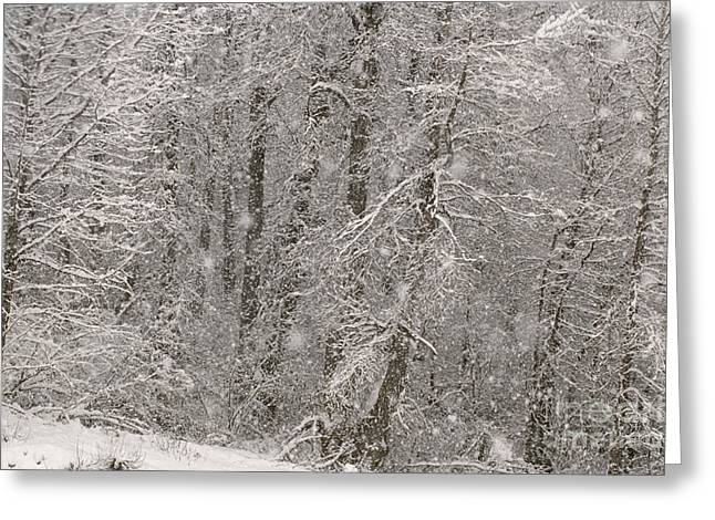 Snowstorm Greeting Cards - Winter Snowstorm In Alaska Greeting Card by Ron Sanford