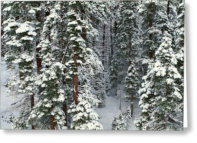 Snow-covered Landscape Greeting Cards - Winter Snowstorm In The Lake Tahoe Greeting Card by Panoramic Images